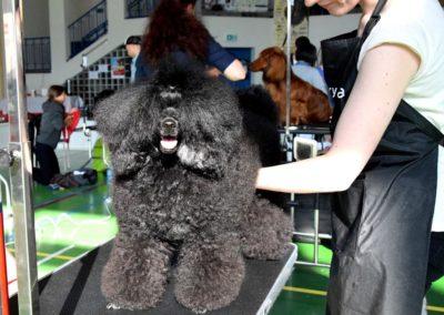 Salon pielegnacji i strzyzenia psow Groomil - konkurs 04