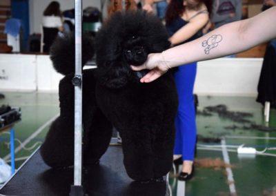 Salon pielegnacji i strzyzenia psow Groomil - konkurs 11