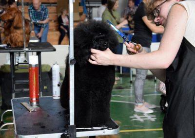Salon pielegnacji i strzyzenia psow Groomil - konkurs 17