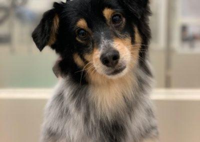 salon pielęgnacji psów bemowo bielany