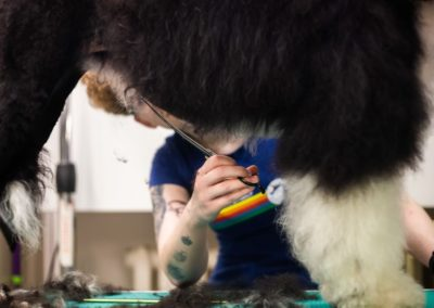 strzyżenie psa młociny chomiczówka bemowo bielany